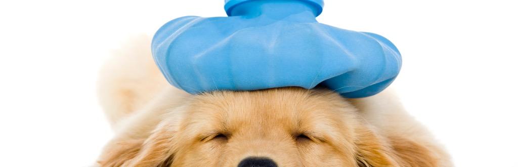 Canine Health & Nutrition Course