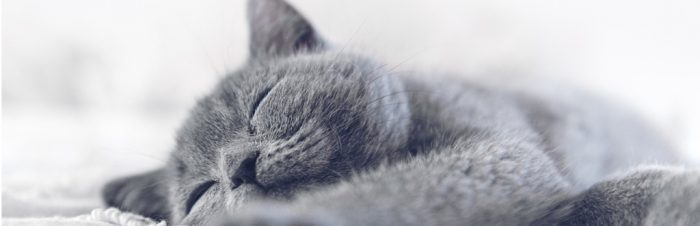 Feline Studies Course