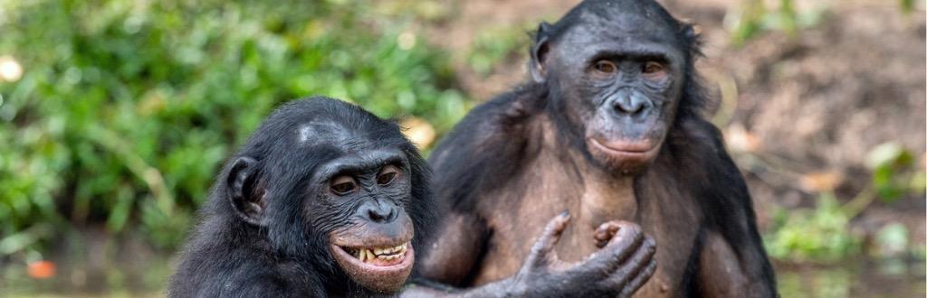 Primatology Course