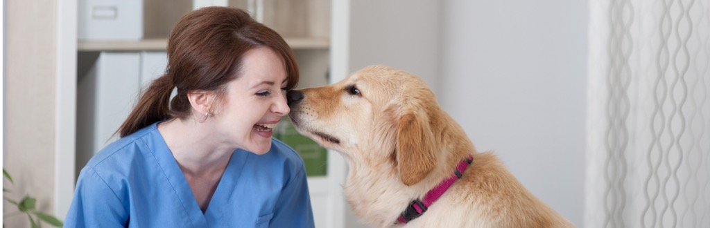 Veterinary Support Assistant Course