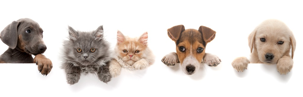 Domestic Animal care course